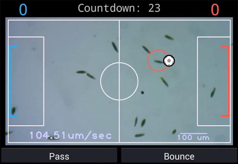 eukaryotic-soccer