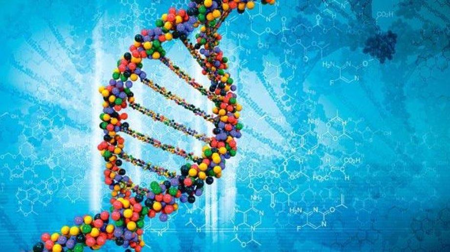 В Китаї ввели тимчасову заборону на досліди з редагування ДНК