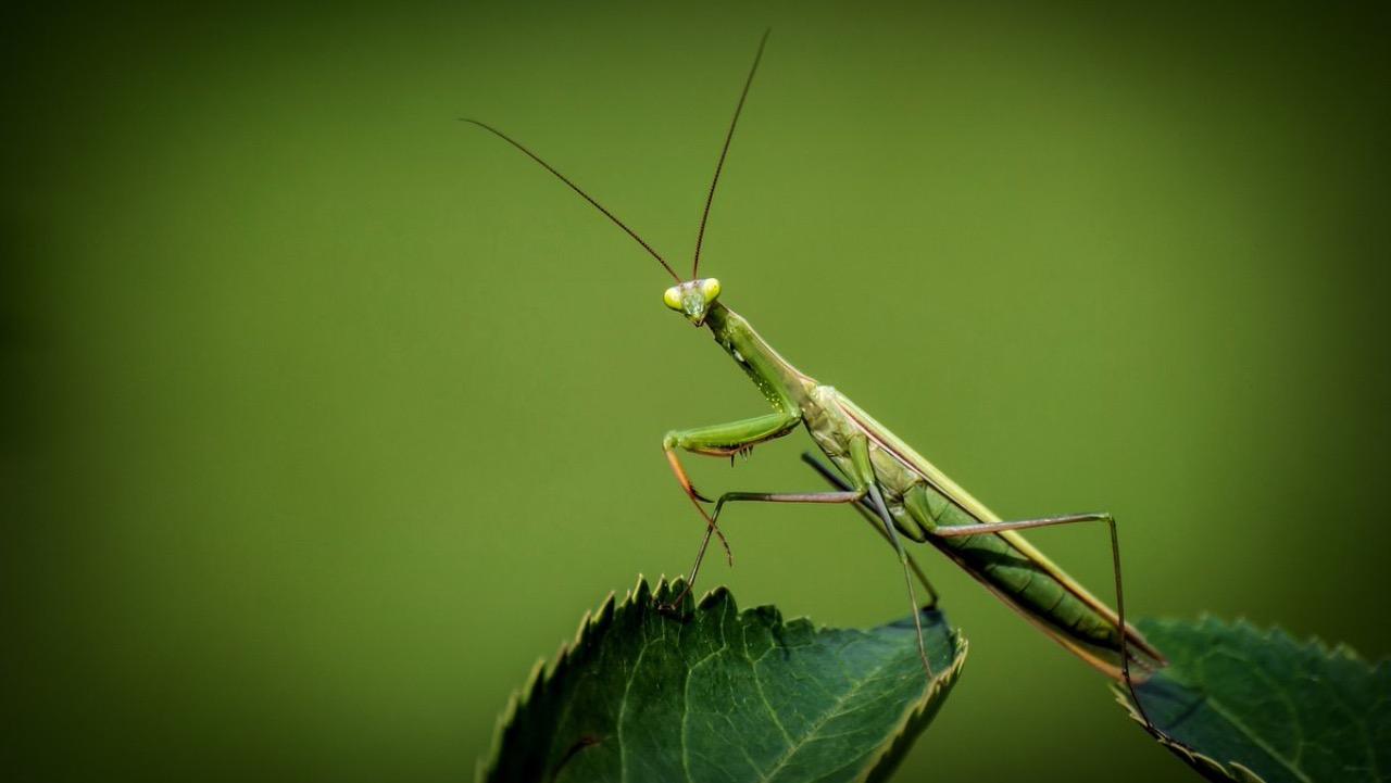 DARPA вважає, що мозок комах зробить прорив в області штучного інтелекту