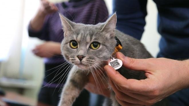 У Києві запустився реєстр домашніх тварин